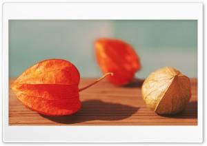 Chinese Lantern Fruits Macro HD Wide Wallpaper for 4K UHD Widescreen desktop & smartphone