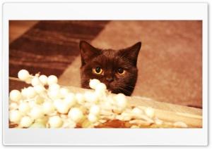 Chocolate Cat Ultra HD Wallpaper for 4K UHD Widescreen desktop, tablet & smartphone