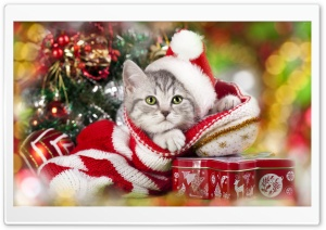 Christmas cat HD Wide Wallpaper for 4K UHD Widescreen desktop & smartphone