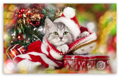 Christmas cat ❤ 4K UHD Wallpaper for Wide 16:10 Widescreen WHXGA WQXGA WUXGA WXGA ;