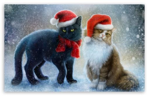 Christmas Cats 4k Hd Desktop Wallpaper For 4k Ultra Hd Tv