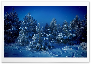 Christmas Fairyland HD Wide Wallpaper for Widescreen