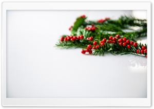 Christmas Holly Berries Background HD Wide Wallpaper for Widescreen