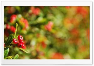 Christmas Mood Ultra HD Wallpaper for 4K UHD Widescreen desktop, tablet & smartphone
