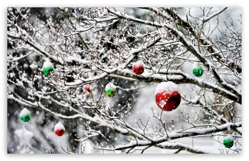 Christmas Ornaments In The Snow HD wallpaper for Wide 16:10 5:3 Widescreen WHXGA WQXGA WUXGA WXGA WGA ; HD 16:9 High Definition WQHD QWXGA 1080p 900p 720p QHD nHD ; UHD 16:9 WQHD QWXGA 1080p 900p 720p QHD nHD ; Standard 4:3 5:4 3:2 Fullscreen UXGA XGA SVGA QSXGA SXGA DVGA HVGA HQVGA devices ( Apple PowerBook G4 iPhone 4 3G 3GS iPod Touch ) ; Tablet 1:1 ; iPad 1/2/Mini ; Mobile 4:3 5:3 3:2 16:9 5:4 - UXGA XGA SVGA WGA DVGA HVGA HQVGA devices ( Apple PowerBook G4 iPhone 4 3G 3GS iPod Touch ) WQHD QWXGA 1080p 900p 720p QHD nHD QSXGA SXGA ; Dual 16:10 5:3 4:3 5:4 WHXGA WQXGA WUXGA WXGA WGA UXGA XGA SVGA QSXGA SXGA ;