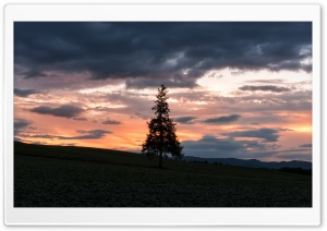 Christmas Tree Silhouette at Sunset HD Wide Wallpaper for Widescreen