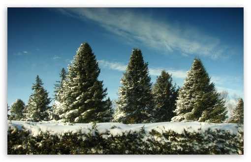 Christmas Trees Covered In Snow HD wallpaper for Standard 4:3 5:4 Fullscreen UXGA XGA SVGA QSXGA SXGA ; Wide 16:10 5:3 Widescreen WHXGA WQXGA WUXGA WXGA WGA ; HD 16:9 High Definition WQHD QWXGA 1080p 900p 720p QHD nHD ; Other 3:2 DVGA HVGA HQVGA devices ( Apple PowerBook G4 iPhone 4 3G 3GS iPod Touch ) ; Mobile VGA WVGA iPhone iPad PSP Phone - VGA QVGA Smartphone ( PocketPC GPS iPod Zune BlackBerry HTC Samsung LG Nokia Eten Asus ) WVGA WQVGA Smartphone ( HTC Samsung Sony Ericsson LG Vertu MIO ) HVGA Smartphone ( Apple iPhone iPod BlackBerry HTC Samsung Nokia ) Sony PSP Zune HD Zen ; Tablet 2 Android ;