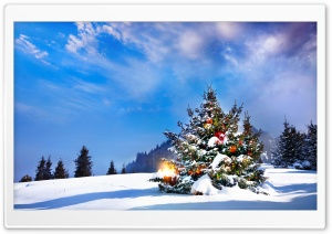 Christmas Trees Decorated Outside HD Wide Wallpaper for Widescreen