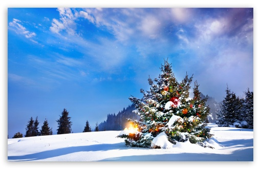 Christmas Trees Decorated Outside ❤ 4K UHD Wallpaper for Wide 16:10 5:3 Widescreen WHXGA WQXGA WUXGA WXGA WGA ; 4K UHD 16:9 Ultra High Definition 2160p 1440p 1080p 900p 720p ; UHD 16:9 2160p 1440p 1080p 900p 720p ; Standard 4:3 5:4 3:2 Fullscreen UXGA XGA SVGA QSXGA SXGA DVGA HVGA HQVGA ( Apple PowerBook G4 iPhone 4 3G 3GS iPod Touch ) ; Smartphone 5:3 WGA ; Tablet 1:1 ; iPad 1/2/Mini ; Mobile 4:3 5:3 3:2 16:9 5:4 - UXGA XGA SVGA WGA DVGA HVGA HQVGA ( Apple PowerBook G4 iPhone 4 3G 3GS iPod Touch ) 2160p 1440p 1080p 900p 720p QSXGA SXGA ;