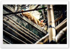 City Cat Ultra HD Wallpaper for 4K UHD Widescreen desktop, tablet & smartphone