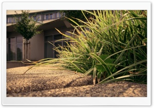 City Grass HD Wide Wallpaper for 4K UHD Widescreen desktop & smartphone