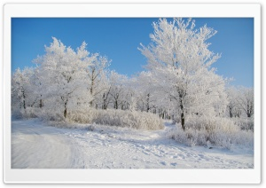 Clear Winter Day HD Wide Wallpaper for Widescreen
