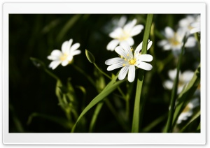 Close-up Flowers HD Wide Wallpaper for Widescreen
