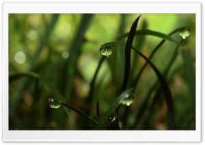 Close Up Grass Dew HD Wide Wallpaper for Widescreen