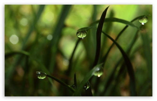 Close Up Grass Dew ❤ 4K UHD Wallpaper for Wide 16:10 Widescreen WHXGA WQXGA WUXGA WXGA ; Standard 4:3 5:4 3:2 Fullscreen UXGA XGA SVGA QSXGA SXGA DVGA HVGA HQVGA ( Apple PowerBook G4 iPhone 4 3G 3GS iPod Touch ) ; Tablet 1:1 ; iPad 1/2/Mini ; Mobile 4:3 5:3 3:2 5:4 - UXGA XGA SVGA WGA DVGA HVGA HQVGA ( Apple PowerBook G4 iPhone 4 3G 3GS iPod Touch ) QSXGA SXGA ;
