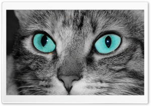 Close Up Of A Grey Tabby Cat Face HD Wide Wallpaper for Widescreen