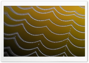 Close-Up Of A Spider Web HD Wide Wallpaper for Widescreen