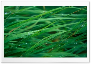 Close Up Of Dew On Grass HD Wide Wallpaper for Widescreen