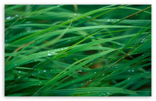 Close Up Of Dew On Grass ❤ 4K UHD Wallpaper for Wide 16:10 5:3 Widescreen WHXGA WQXGA WUXGA WXGA WGA ; 4K UHD 16:9 Ultra High Definition 2160p 1440p 1080p 900p 720p ; Standard 4:3 5:4 3:2 Fullscreen UXGA XGA SVGA QSXGA SXGA DVGA HVGA HQVGA ( Apple PowerBook G4 iPhone 4 3G 3GS iPod Touch ) ; Tablet 1:1 ; iPad 1/2/Mini ; Mobile 4:3 5:3 3:2 16:9 5:4 - UXGA XGA SVGA WGA DVGA HVGA HQVGA ( Apple PowerBook G4 iPhone 4 3G 3GS iPod Touch ) 2160p 1440p 1080p 900p 720p QSXGA SXGA ; Dual 16:10 4:3 5:4 WHXGA WQXGA WUXGA WXGA UXGA XGA SVGA QSXGA SXGA ;