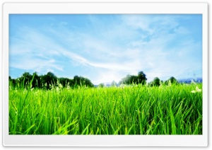 Close-up Of Fresh Grass HD Wide Wallpaper for Widescreen