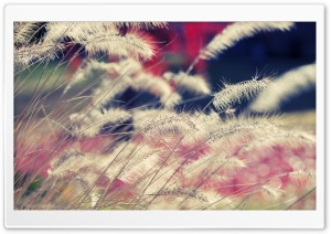 Close-up Of Wild Grass HD Wide Wallpaper for Widescreen