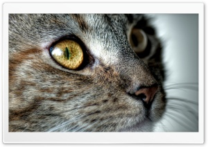 Close Up On A Cat's Face HD Wide Wallpaper for Widescreen