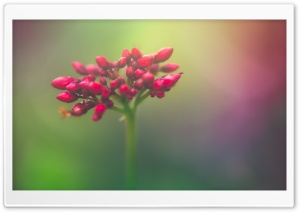 Closed Flower Buds HD Wide Wallpaper for Widescreen