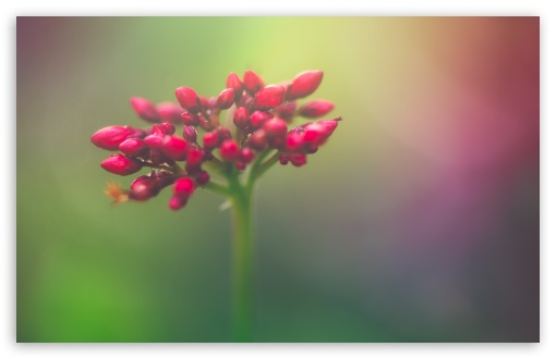 Closed Flower Buds ❤ 4K UHD Wallpaper for Wide 16:10 5:3 Widescreen WHXGA WQXGA WUXGA WXGA WGA ; 4K UHD 16:9 Ultra High Definition 2160p 1440p 1080p 900p 720p ; UHD 16:9 2160p 1440p 1080p 900p 720p ; Standard 4:3 5:4 3:2 Fullscreen UXGA XGA SVGA QSXGA SXGA DVGA HVGA HQVGA ( Apple PowerBook G4 iPhone 4 3G 3GS iPod Touch ) ; Tablet 1:1 ; iPad 1/2/Mini ; Mobile 4:3 5:3 3:2 16:9 5:4 - UXGA XGA SVGA WGA DVGA HVGA HQVGA ( Apple PowerBook G4 iPhone 4 3G 3GS iPod Touch ) 2160p 1440p 1080p 900p 720p QSXGA SXGA ; Dual 5:4 QSXGA SXGA ;