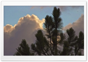 Clouds Eclipsing Tree HD Wide Wallpaper for Widescreen