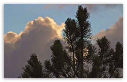 Clouds Eclipsing Tree HD wallpaper for Wide 16:10 5:3 Widescreen WHXGA WQXGA WUXGA WXGA WGA ; HD 16:9 High Definition WQHD QWXGA 1080p 900p 720p QHD nHD ; UHD 16:9 WQHD QWXGA 1080p 900p 720p QHD nHD ; Standard 4:3 5:4 3:2 Fullscreen UXGA XGA SVGA QSXGA SXGA DVGA HVGA HQVGA devices ( Apple PowerBook G4 iPhone 4 3G 3GS iPod Touch ) ; Tablet 1:1 ; iPad 1/2/Mini ; Mobile 4:3 5:3 3:2 16:9 5:4 - UXGA XGA SVGA WGA DVGA HVGA HQVGA devices ( Apple PowerBook G4 iPhone 4 3G 3GS iPod Touch ) WQHD QWXGA 1080p 900p 720p QHD nHD QSXGA SXGA ;