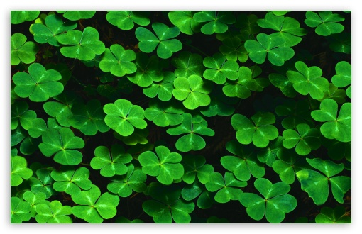 Clover HD wallpaper for Wide 16:10 5:3 Widescreen WHXGA WQXGA WUXGA WXGA WGA ; HD 16:9 High Definition WQHD QWXGA 1080p 900p 720p QHD nHD ; Standard 4:3 5:4 3:2 Fullscreen UXGA XGA SVGA QSXGA SXGA DVGA HVGA HQVGA devices ( Apple PowerBook G4 iPhone 4 3G 3GS iPod Touch ) ; Tablet 1:1 ; iPad 1/2/Mini ; Mobile 4:3 5:3 3:2 16:9 5:4 - UXGA XGA SVGA WGA DVGA HVGA HQVGA devices ( Apple PowerBook G4 iPhone 4 3G 3GS iPod Touch ) WQHD QWXGA 1080p 900p 720p QHD nHD QSXGA SXGA ; Dual 16:10 5:3 16:9 4:3 5:4 WHXGA WQXGA WUXGA WXGA WGA WQHD QWXGA 1080p 900p 720p QHD nHD UXGA XGA SVGA QSXGA SXGA ;