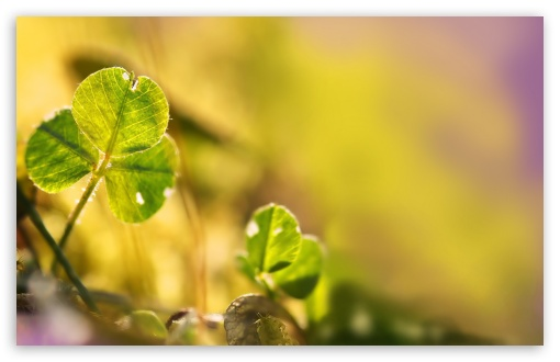 Clover Leaf, Bokeh HD wallpaper for Wide 16:10 5:3 Widescreen WHXGA WQXGA WUXGA WXGA WGA ; HD 16:9 High Definition WQHD QWXGA 1080p 900p 720p QHD nHD ; Standard 4:3 5:4 3:2 Fullscreen UXGA XGA SVGA QSXGA SXGA DVGA HVGA HQVGA devices ( Apple PowerBook G4 iPhone 4 3G 3GS iPod Touch ) ; Tablet 1:1 ; iPad 1/2/Mini ; Mobile 4:3 5:3 3:2 16:9 5:4 - UXGA XGA SVGA WGA DVGA HVGA HQVGA devices ( Apple PowerBook G4 iPhone 4 3G 3GS iPod Touch ) WQHD QWXGA 1080p 900p 720p QHD nHD QSXGA SXGA ;