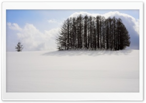 Clump of Trees, Winter HD Wide Wallpaper for Widescreen
