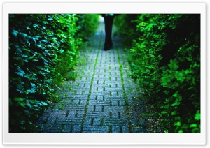 Cobblestone Alley HD Wide Wallpaper for Widescreen