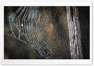 Cobweb HD Wide Wallpaper for Widescreen
