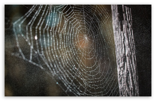 Cobweb ❤ 4K UHD Wallpaper for Wide 16:10 5:3 Widescreen WHXGA WQXGA WUXGA WXGA WGA ; 4K UHD 16:9 Ultra High Definition 2160p 1440p 1080p 900p 720p ; UHD 16:9 2160p 1440p 1080p 900p 720p ; Standard 4:3 5:4 3:2 Fullscreen UXGA XGA SVGA QSXGA SXGA DVGA HVGA HQVGA ( Apple PowerBook G4 iPhone 4 3G 3GS iPod Touch ) ; Smartphone 5:3 WGA ; Tablet 1:1 ; iPad 1/2/Mini ; Mobile 4:3 5:3 3:2 16:9 5:4 - UXGA XGA SVGA WGA DVGA HVGA HQVGA ( Apple PowerBook G4 iPhone 4 3G 3GS iPod Touch ) 2160p 1440p 1080p 900p 720p QSXGA SXGA ; Dual 16:10 5:3 16:9 4:3 5:4 WHXGA WQXGA WUXGA WXGA WGA 2160p 1440p 1080p 900p 720p UXGA XGA SVGA QSXGA SXGA ;