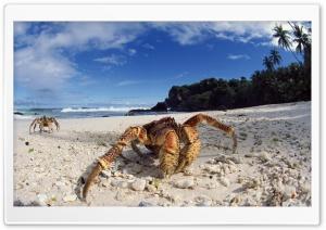 Coconut Crab On Beach Christmas Island Indian Ocean Ultra HD Wallpaper for 4K UHD Widescreen desktop, tablet & smartphone