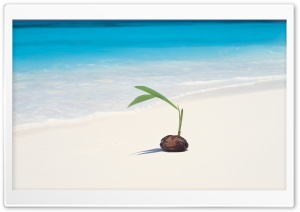 Coconut Seedling HD Wide Wallpaper for Widescreen