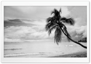 Coconut Tree Black and White HD Wide Wallpaper for Widescreen