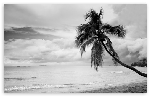 Coconut Tree Black and White ❤ 4K UHD Wallpaper for Wide 16:10 5:3 Widescreen WHXGA WQXGA WUXGA WXGA WGA ; UltraWide 21:9 24:10 ; 4K UHD 16:9 Ultra High Definition 2160p 1440p 1080p 900p 720p ; UHD 16:9 2160p 1440p 1080p 900p 720p ; Standard 4:3 5:4 3:2 Fullscreen UXGA XGA SVGA QSXGA SXGA DVGA HVGA HQVGA ( Apple PowerBook G4 iPhone 4 3G 3GS iPod Touch ) ; Smartphone 16:9 3:2 5:3 2160p 1440p 1080p 900p 720p DVGA HVGA HQVGA ( Apple PowerBook G4 iPhone 4 3G 3GS iPod Touch ) WGA ; Tablet 1:1 ; iPad 1/2/Mini ; Mobile 4:3 5:3 3:2 16:9 5:4 - UXGA XGA SVGA WGA DVGA HVGA HQVGA ( Apple PowerBook G4 iPhone 4 3G 3GS iPod Touch ) 2160p 1440p 1080p 900p 720p QSXGA SXGA ;