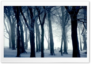 Cold Day HD Wide Wallpaper for Widescreen