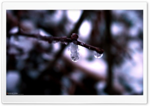 Cold Drops (Precious But Fleeting) HD Wide Wallpaper for Widescreen
