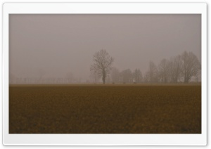 Cold Foggy Day HD Wide Wallpaper for Widescreen