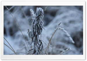 Coldness HD Wide Wallpaper for Widescreen