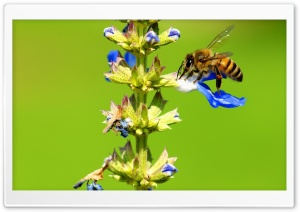 Collecting Nectar HD Wide Wallpaper for Widescreen