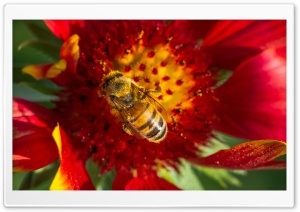 Collecting Pollen HD Wide Wallpaper for Widescreen