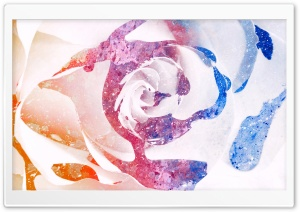 Color Splatter Rose HD Wide Wallpaper for Widescreen