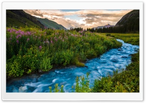 Colorado Flowers, River, USA HD Wide Wallpaper for 4K UHD Widescreen desktop & smartphone