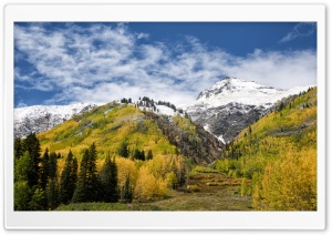 Colorado Leaves HD Wide Wallpaper for Widescreen