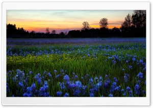 Colored Flower Field HD Wide Wallpaper for Widescreen